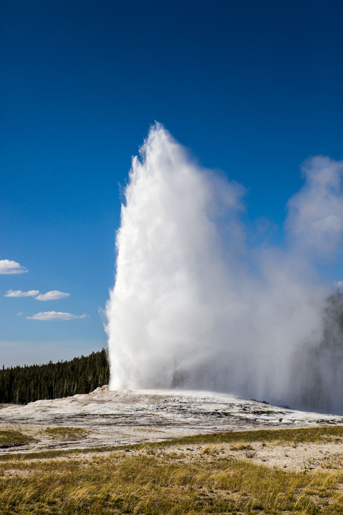 Sneezed On by Old Faithful!