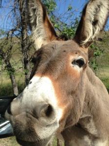 """Don't Sing Donkey!"""