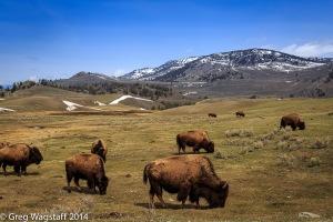 Yellowstone0007