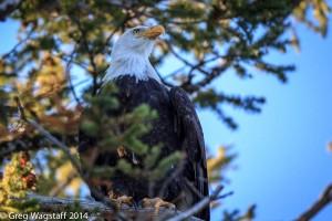 Eagles-10