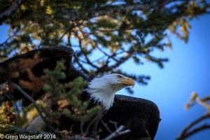 Eagles-11