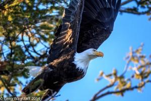 Eagles-13