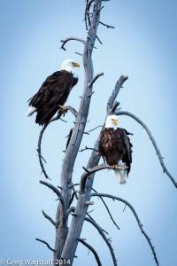 Eagles-6