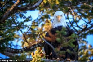 Eagles-8