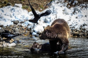 Grizzly Tales-1