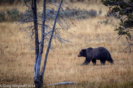 Grizzly Tales-14