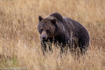 Grizzly Tales-17