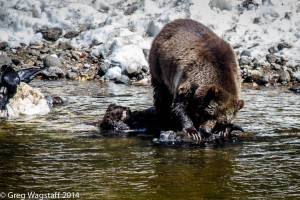 Grizzly Tales-2