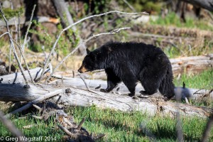 Grizzly Tales-5