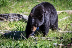 Grizzly Tales-6