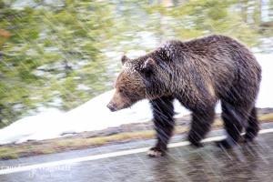 Yellowstone 2015-12