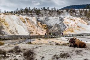 Yellowstone 2015-33