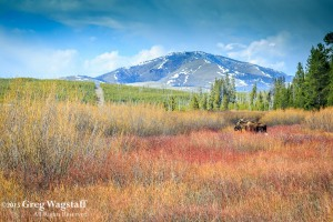 Yellowstone 2015-9