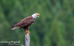 Quake Lake Bird Sanctuary-1