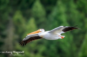 Quake Lake Bird Sanctuary-2