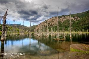 Quake Lake Bird Sanctuary-3