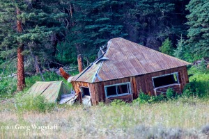Quake Lake Bird Sanctuary-5