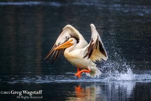 Quake Lake Bird Sanctuary-7