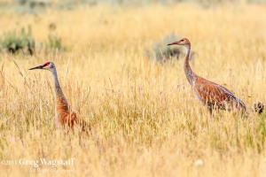 Redrock WIlld Life Reserve-2