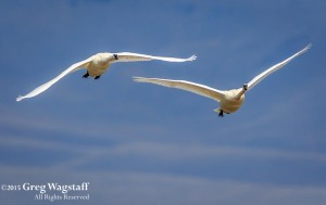 Redrock WIlld Life Reserve-3