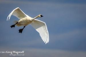 Redrock WIlld Life Reserve-4