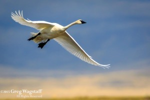 Redrock WIlld Life Reserve-5