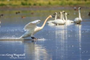 Redrock WIlld Life Reserve-7