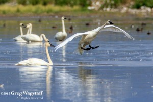 Redrock WIlld Life Reserve-8