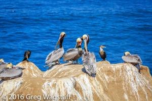 La Jolla Pelicans-9