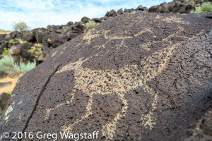 Petroglyph National Monument-2